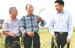 Sea rice processing project lands in Suixi