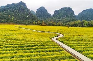 HK, Macao, Taiwan people to work towards rural revitalization