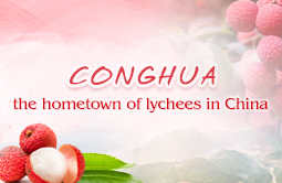 Conghua- the hometown of lychees in China