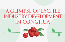 A glimpse of lychee industry development in Conghua