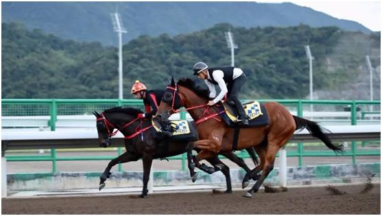 Modern equine Industry