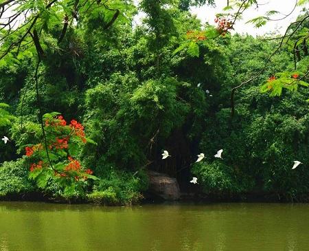 Zhongshan Park (Birds' Paradise)