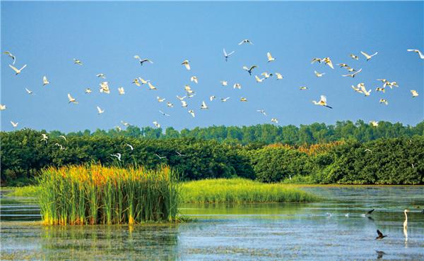 Resultado de imagem para Nansha Wetland