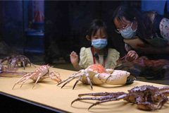 Crab, shrimp, lobster form heart of Guangdong exhibition