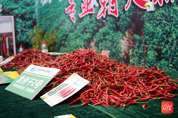 Guizhou's chili production and sales rank national first in 2020