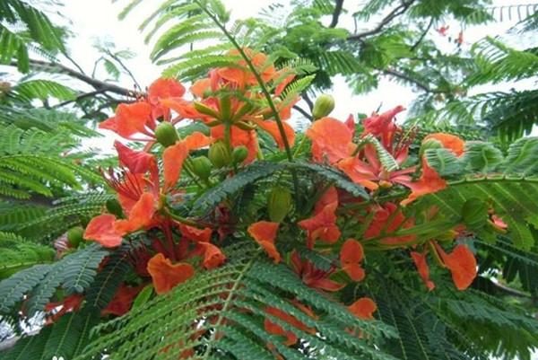 Hainan Tropical Wildlife Park and Botanical Garden (Haikou)
