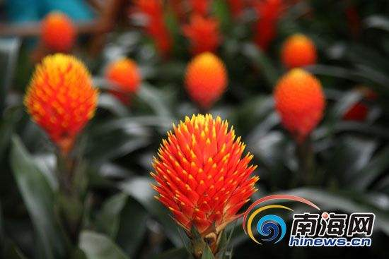Hainan Flower Park (Haikou)