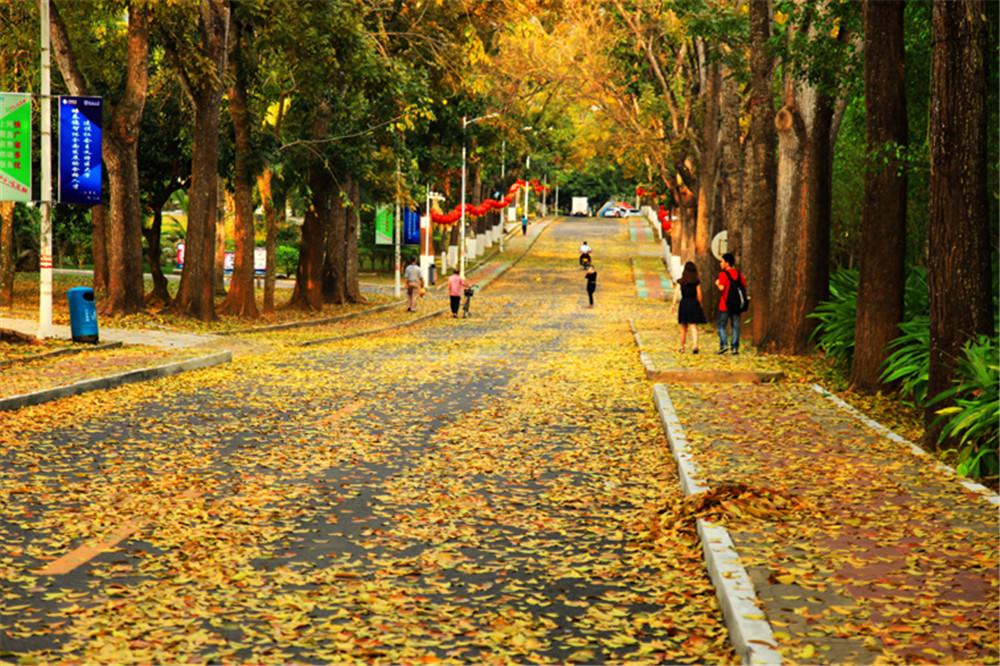 农林大道 Nonglin Avenue.jpg
