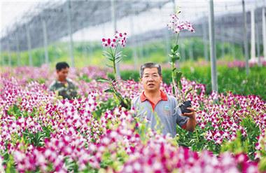 Talent recognition standards recommended to boost rural rejuvenation