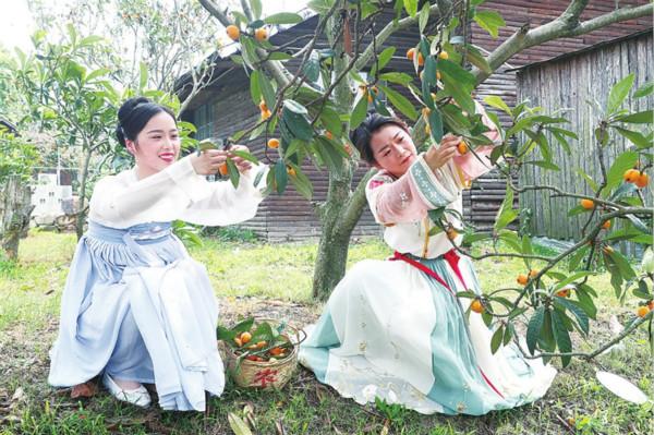 Loquat Festival helps farmers increase income
