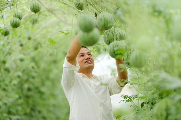 Watermelons growing in the air in Huzhou
