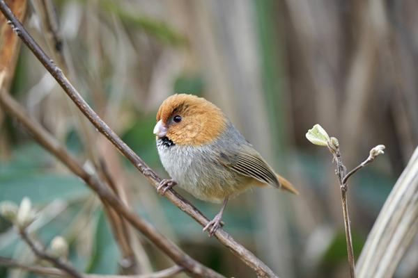 Rare wildlife discovered in Huzhou