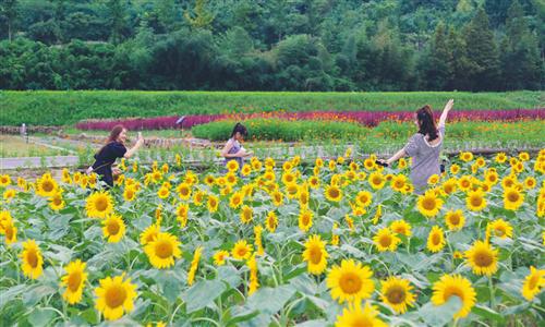 'Beautiful village' campaign bears fruit in Huzhou