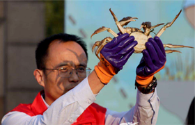 Hairy crabs benefit farmers in Yixing
