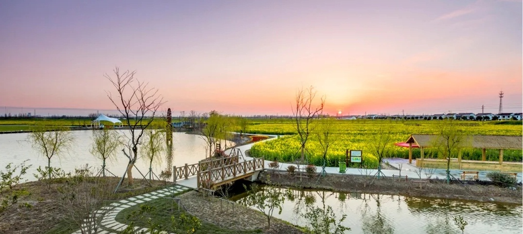 Changyinsua Cole Flower Sea opens in Zhangjiagang
