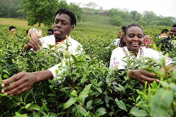 春茶1.jpg