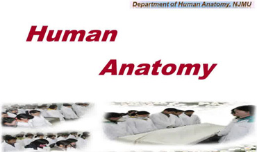 Systematic Anatomy