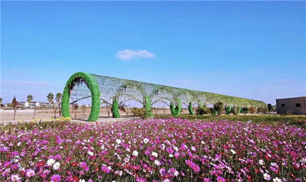 In pics: enjoy fascinating flower sea in Haimen