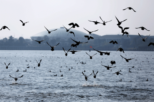 Qidong issues measures to protect wetland at Yangtze River estuary