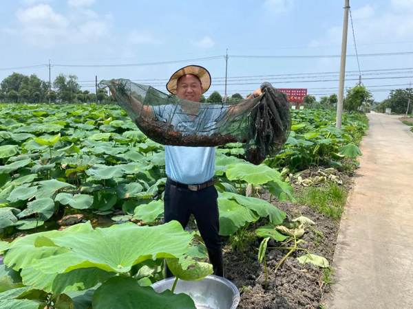Hai'an improves farmers' incomes with mixed cultivation methods