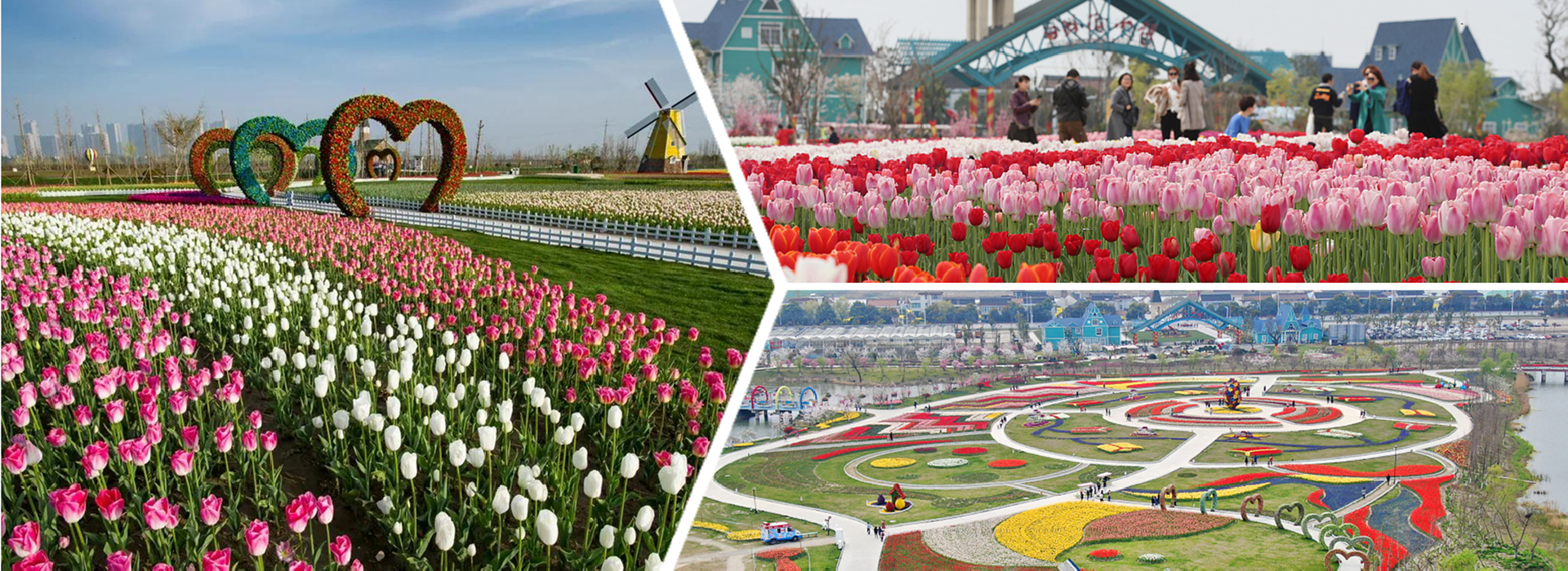 Have a date with spring in Tongzhou's Flower Town