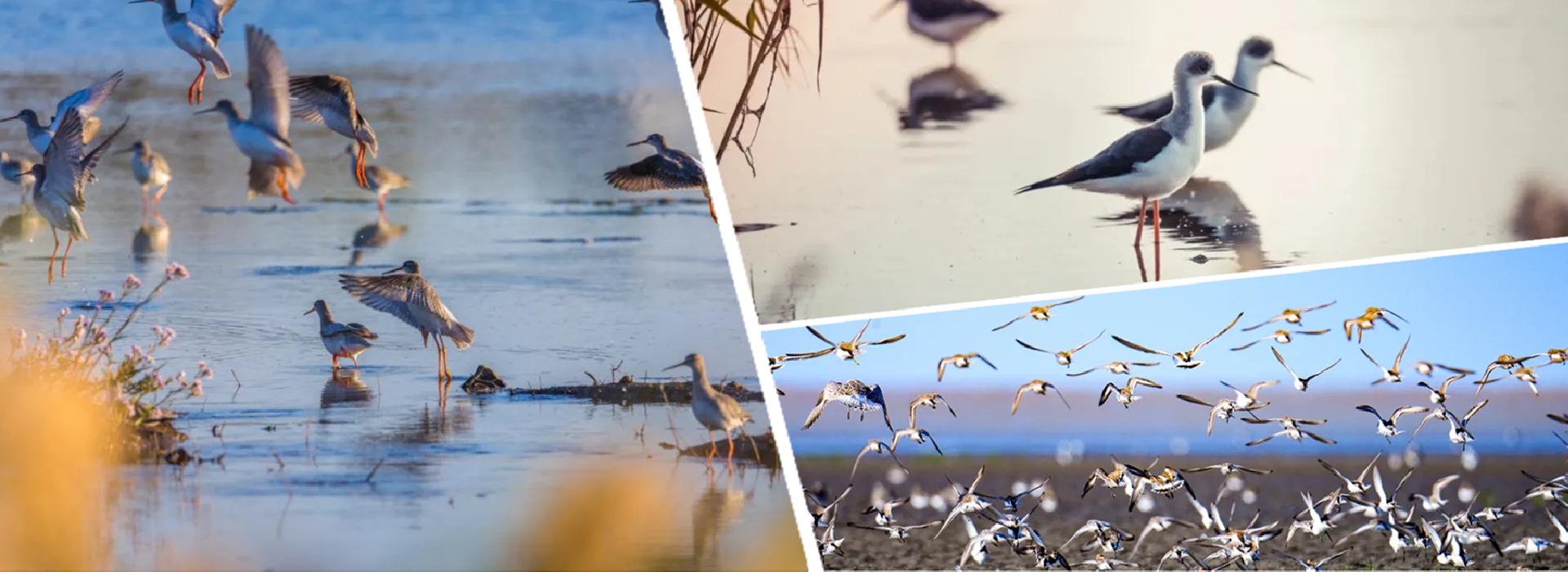 Qidong makes a wonderland for birds
