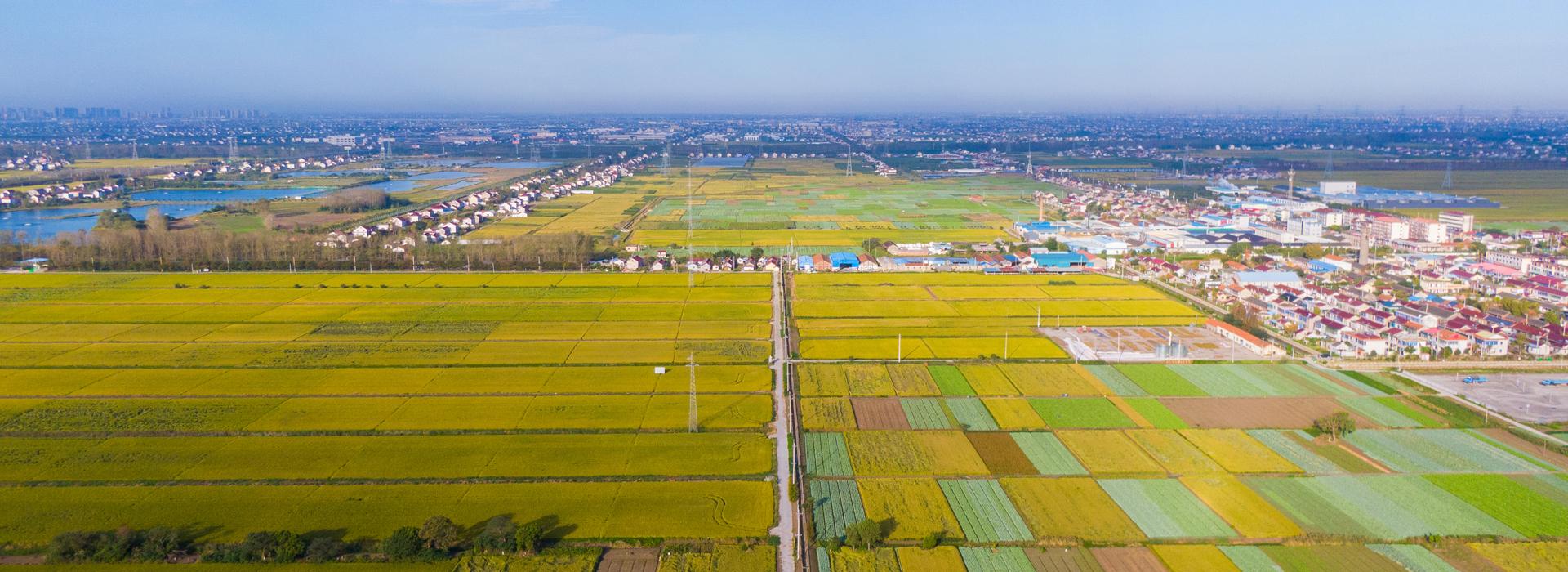 Massive color palette in Hai'an's farmlands