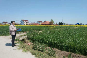 Rudong develops cooperative farms for rural revitalization