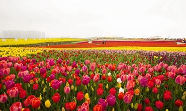 Xinhu Four-season Flowers Park