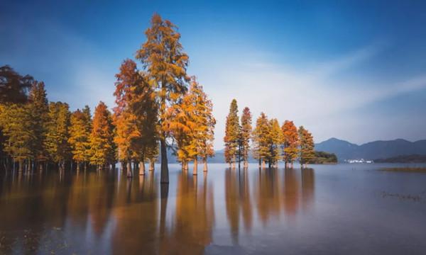 红杉林.webp.jpg