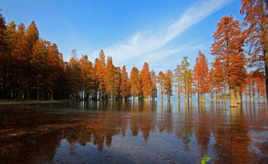 Siming Lake redwoods a popular sight