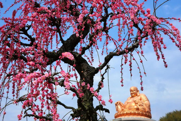 In pics: Plum blossoms on Xuedou Mountain