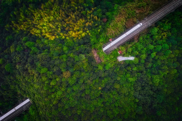 Afforestation rate stands at 48% in Ningbo