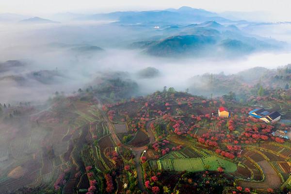 Captivating aerial views of Dalan town in Yuyao