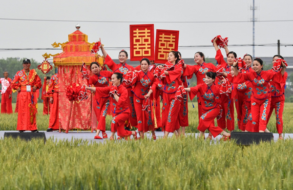 Villagers stage concert in paddy field