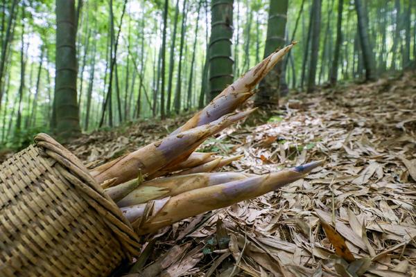Rhizome shoots hit the market in Ningbo