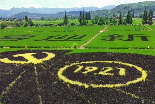 Farmers create rice paddy art to mark CPC centenary