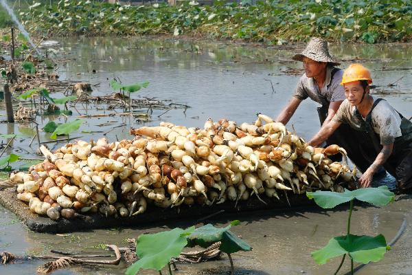 Photos showcase hardworking farmers in Ningbo