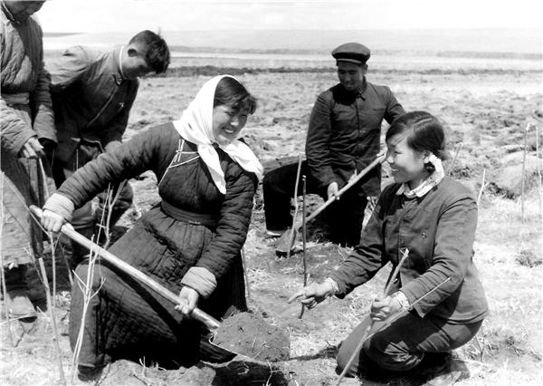 """从上世纪五十年代""""禁止开荒,保护牧场"""",六十年代""""种树种草"""",七十年代""""农林水综合治理"""",八十年代""""三种五小""""、九十年代""""植被建设是最大的基本建设"""",鄂尔多斯迈向绿色的脚步一直没有停歇。图为上世纪六十年代农牧民积极种树场景.png"""