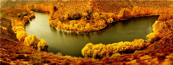 鄂尔多斯共有199个湿地,包括泊江海子、都斯图河、杭锦淖尔3个湿地自然保护区。近年来,生态环境的持续改善让鄂尔多斯成为各类珍稀鸟类迁徙和繁殖的天堂,每年这里迁徙繁殖的鸟类已超过10万只。图为?湿地和国家一级保护鸟类——遗鸥。.png