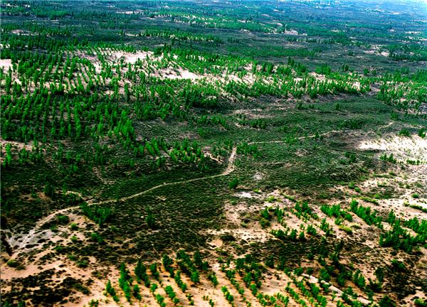 如今,鄂尔多斯毛乌素沙地70%的面积、库布其沙漠25%的面积得到治理和控制,全市75%的国土面积披上了绿装。图为毛乌素沙地治理成效。.png