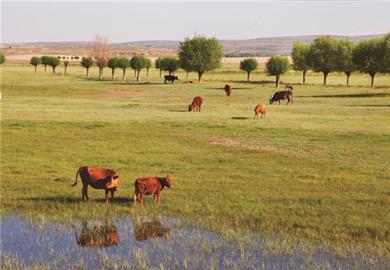 Anti-desertification work in Maowusu Desert delivers results