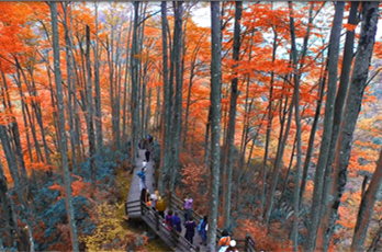 Guangwu Mountain Red Leaf Festival kicks off
