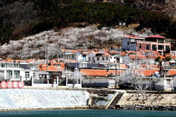 Weihai develops model for rural revitalization