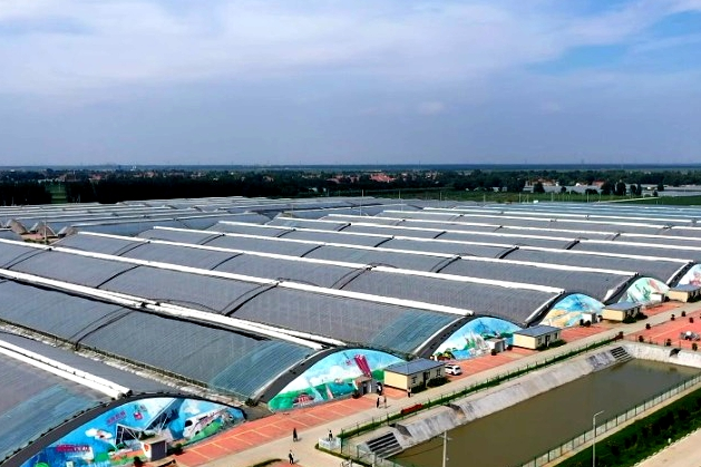 Shandong's amazing agriculture