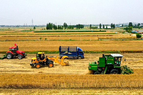 Shandong boosts rural development