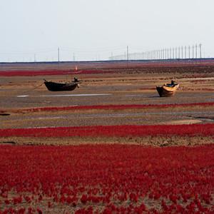 黄河口湿地红地毯416920717499476344_副本.jpg