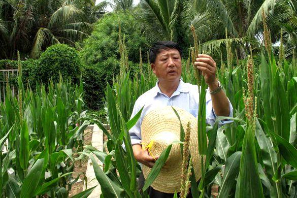 Agriculturist creates national maize revolution