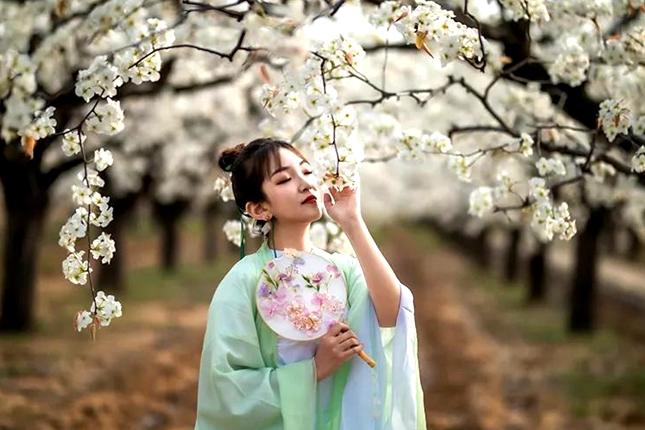 Flowers bloom as spring arrives in Jining