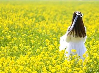 Explore the spring scenery in Jining